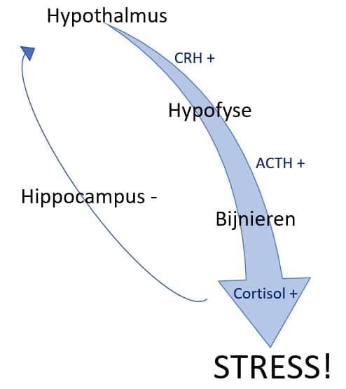 hoe cortisol verminderen